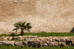 Small palm tree on an old wall Stock Image