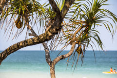 Small palm trees on Phu Quoc Island Royalty Free Stock Photos