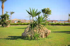 Small palm trees Stock Images