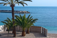 Small palm trees on tropical beach. On azure coast in france Stock Photography