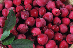 Small paradise apples Royalty Free Stock Images