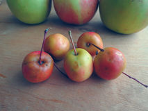 Small paradise apples Stock Photography