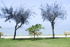 A small park in Bahrain Causeway Royalty Free Stock Photography