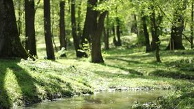 Small Park River Meanders stock video
