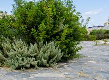 A small park  in Torrevieja, Spain. Royalty Free Stock Photo