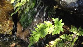 Small Park Waterfall With Fern stock video footage