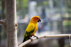 Small parrot Royalty Free Stock Images