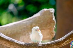 Small parrot fly to branch for eat food from human. Small parrot fly to branch and waiting for eat food from human Royalty Free Stock Photo