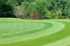 Small part of golf field Stock Image