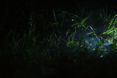 Small part of grass field with spotlighted royalty free stock photography