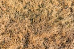 Small dry herbage in field looking awesome at morning in winter season. Small  pasture & herbage close view looking awesome in farming field Stock Photo