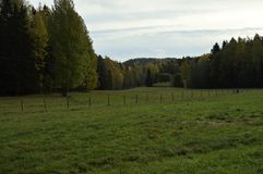 Small pasture in the middle of the forest stock photo