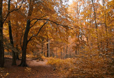 Small path in Autumn forest. Small forest path in warm autumn colors Royalty Free Stock Photos
