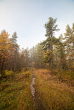 Small path in autumn forest at dawn Stock Photo