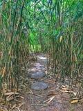 A small path through the cane. stock photos