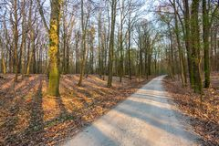 Path in a dry forest at sunset royalty free stock images