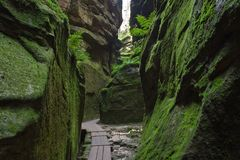 Small path in forest chasm. Small path in forest down in chasm among moss rocks Stock Photos