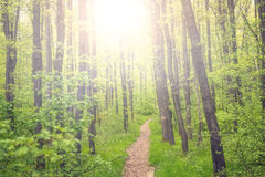 Small path through a forest in summer Royalty Free Stock Photo