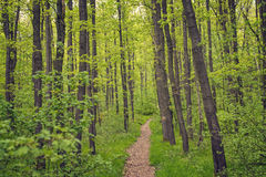 Small path through a forest in summer Stock Photo