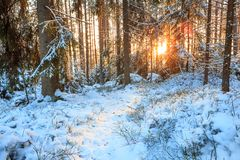Small path at forest sunset Royalty Free Stock Images