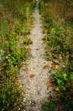 Small path Royalty Free Stock Images