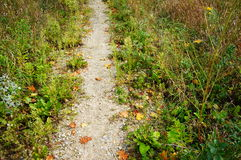 Small path Royalty Free Stock Photo