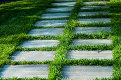 Small path with grass Stock Images