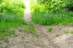 Small path green grass Stock Image