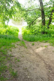Small path green grass Stock Photography