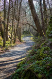 The small path. A small path leading through the forest stock image