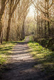 The small path. A small path leading through the forest Royalty Free Stock Images