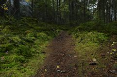 Small path in moss Forest stock image