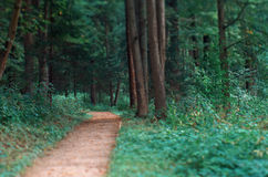 Small path in a park Royalty Free Stock Images
