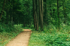 Small path in a park. Small path in old park panoramic Stock Photography