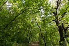 A small path running through a wood, with beautiful, lush trees. With green leaves Royalty Free Stock Photography