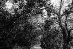 A small path running through a wood, with trees and intricate le. Aves details and textures Stock Image