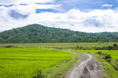 Small path to the rice field Stock Images