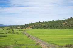 Small path to the rice field Royalty Free Stock Photo