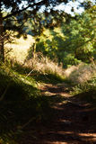 Small path between the trees. On island Fur Royalty Free Stock Photo