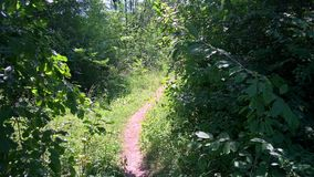 Small Path in the wood. A small path in the wood, with many trees and vegetation. It is located on Melcilor Hill,Brasov,Romania Royalty Free Stock Photography