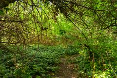 Small Pathway going trough the forest Royalty Free Stock Photo