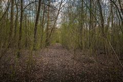 Small Pathway going trough the forest Royalty Free Stock Photos