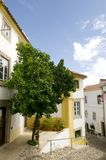 Entrance Patio with Tree, Obidos Village Royalty Free Stock Image