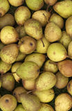 Small Pears Royalty Free Stock Photos