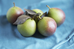 Small pears Stock Images