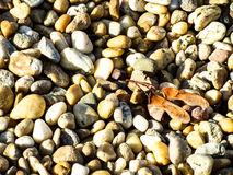 Small pebbles stones leaves autumn. Background small pebbles stones leaves autumn Royalty Free Stock Images