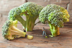 Small people cutting broccoli. The concept of cooking Stock Images