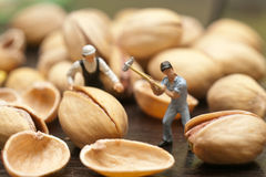 Small people split the pistachios. The concept of cooking. Stock Images