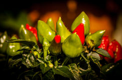 Small Peppers Stock Images