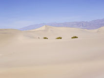 Small person in a big desert Stock Image